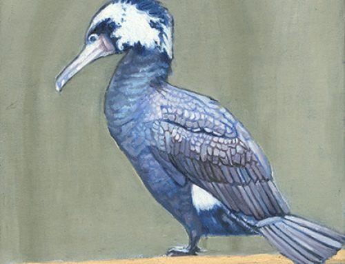 Cormorant 3