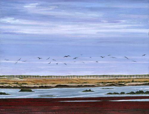 Rye Harbour birds